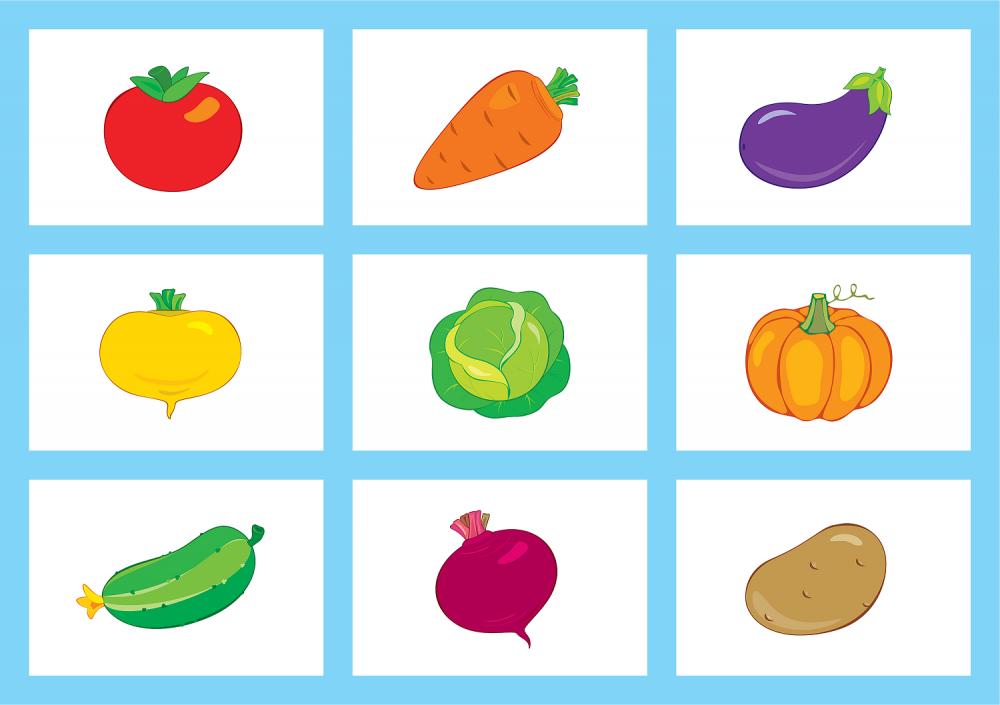 овощи картинки развивающие борей имеют